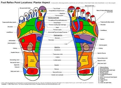 Foot_Chart_Plantar_COLsml